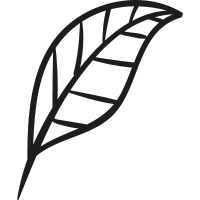 Plant Leaf Garden vector