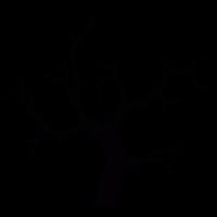 Leafless tree vector