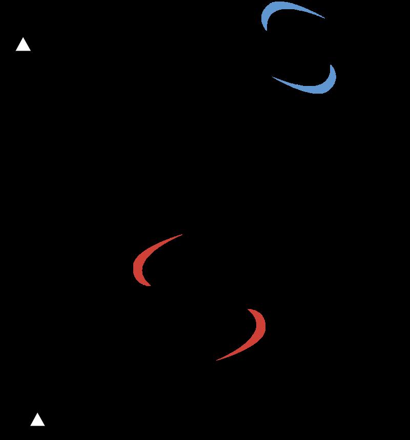 AMEXY vector