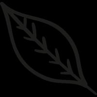 Fall Leaf vector