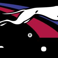 Greyhound 2 vector