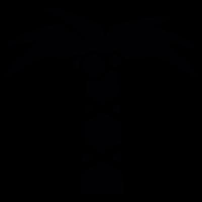 Coconut tree vector logo